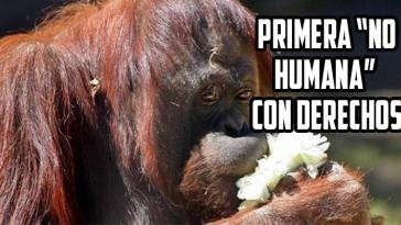 orangutan-sandra