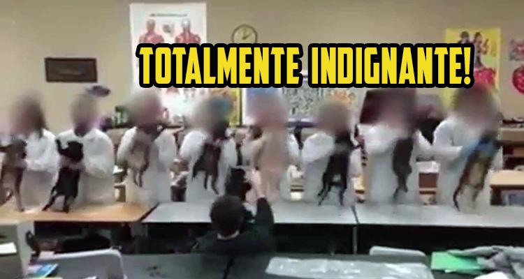 indignacion-total